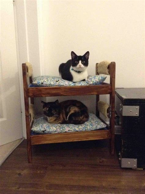 cat bunk bed my friend built her cats a bunk bed and they are currently