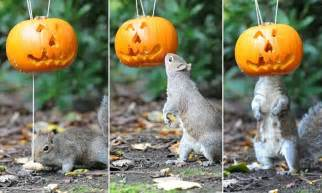 tricky halloween treat squirrel   head