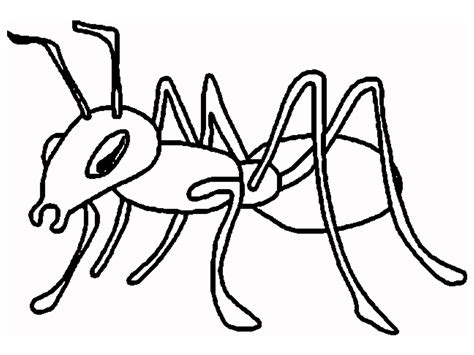 ant coloring pages ant fact and photography