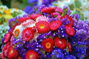 Favorite Color Meaning 11 Of The Most Beautiful Flowers