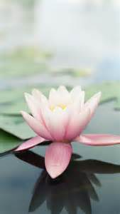 Lotus Iphone Pink Lotus Flower Wallpaper Free Iphone Wallpapers