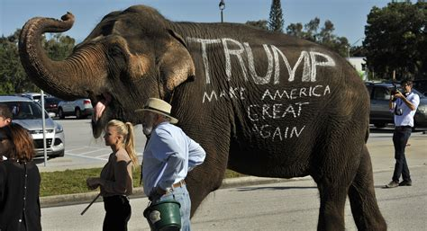 donald trump elephant newt gingrich donald trump might ride into convention on