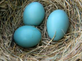 what color are blue eggs color your world robin egg blue a momma s view