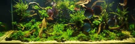 Freshwater Aquarium Plants For Your Discus Fish Tank