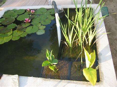 San Raffaello Guilherand Granges plante bassin exterieur 28 images plantes du bassin