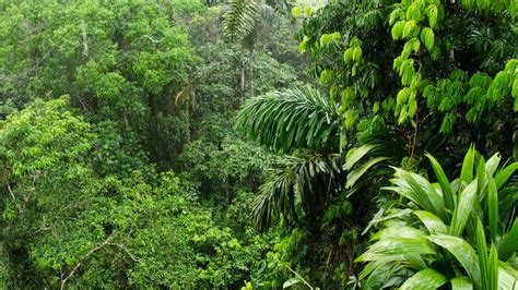 amazon rainforest ability  soak  carbon dioxide