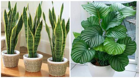 plantas patio interior oscuro las 25 mejores ideas sobre plantas de sombra en pinterest