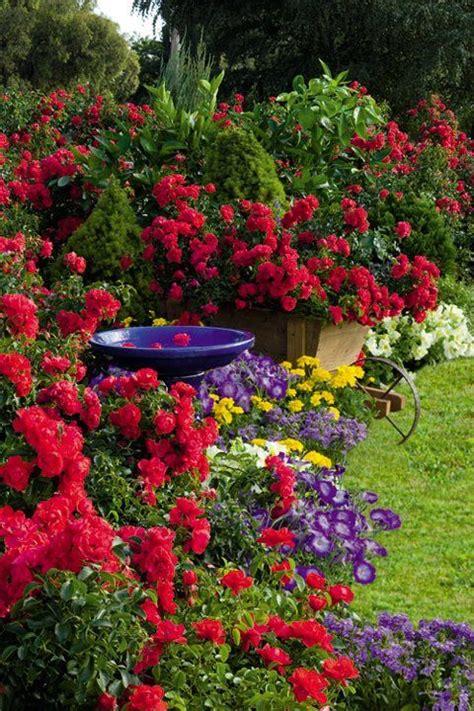 Cottage Garden Flowers La Jardin Flower Carpet Scarlet In Cottage Garden