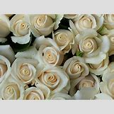 Green Roses Images | 530 x 398 jpeg 91kB