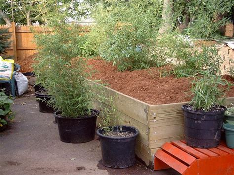 bambooweb info view topic planter boxes for bamboo
