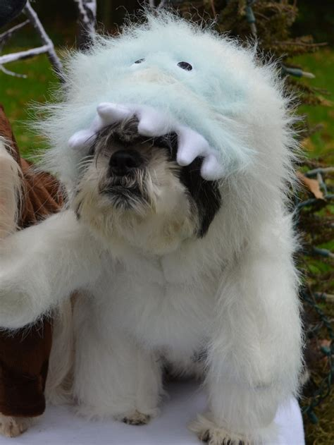 abominable snowman looks like bumble christmas dog costume