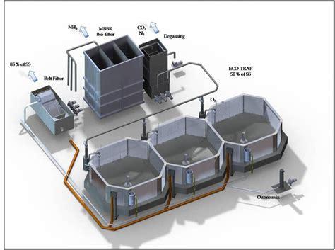 Ikan Lele Sale Ikan Lele Salai budidaya ikan sistem resirkulasi lele sistem