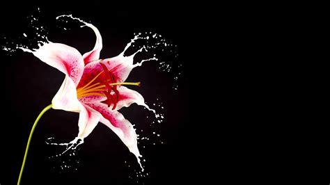 fiori the la boutique fiore carollo fiori centrale di zugliano vi