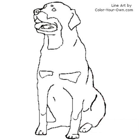 rottweiler puppies coloring pages rottweiler coloring page