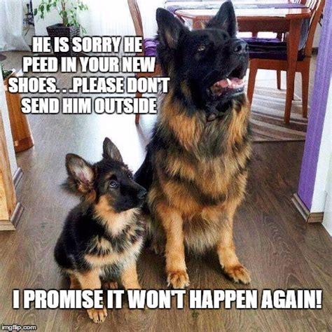 German Shepherd Memes - pin german memes on pinterest