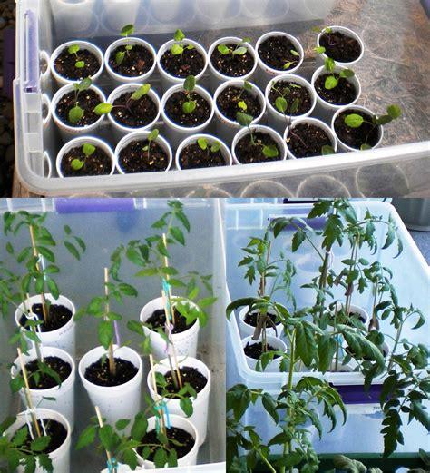 mini greenhouse  gallon ideas