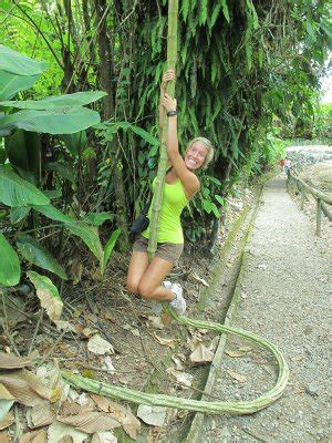swing first vine central highlands of cartago a team adventures