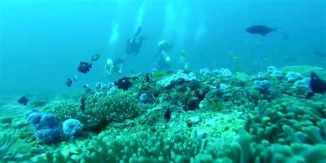 safari with us scuba diving adventures in mozambique