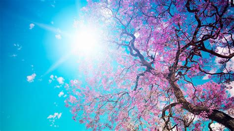 wallpaper desktop spring spring wallpapers best wallpapers