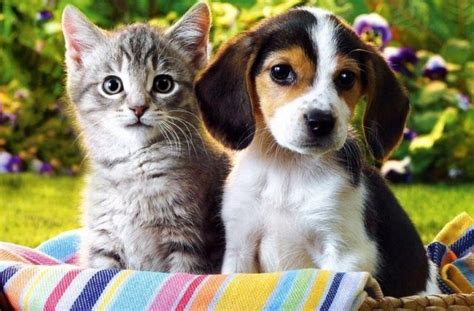 worldwide puppies and kittens countrywide vaccination of dogs and cats launched ahead of world veterinary day