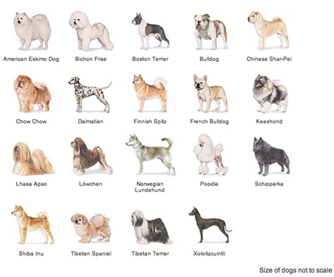 sporting breeds breeds in the sporting autos post