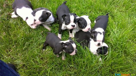 theme names for a litter of puppies ruff day here s a litter of puppies name cuteimages net