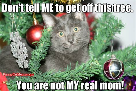 christmas cat memes cat in tree cat meme