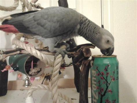 az exotic bird rescue inc hundesalon tiersalon