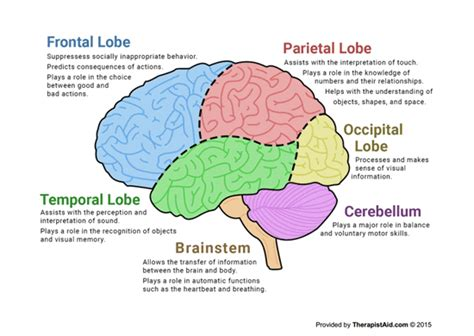 brain diagram worksheet brain worksheet free worksheets library and