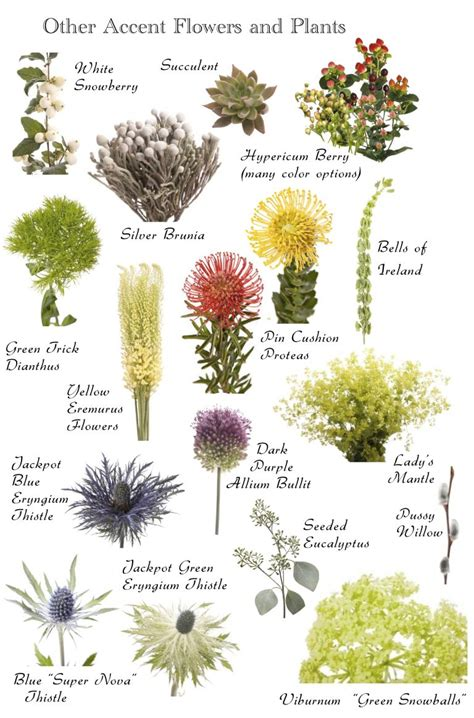 garden plants names and pictures flower names by color flowers flower and floral