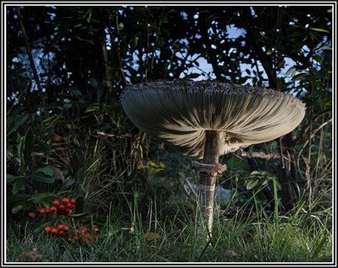Pilze Im Garten Arten by Pilze Im Garten Entfernen Garten House Und Dekor