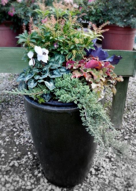 Winter Container Garden - 17 best ideas about winter container gardening on