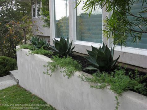 modern landscape with architectural plants modern landscape san francisco by dig your