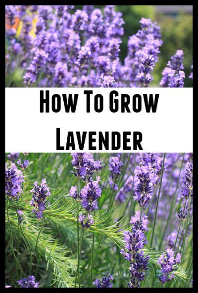 17 best images about outside growing on pinterest