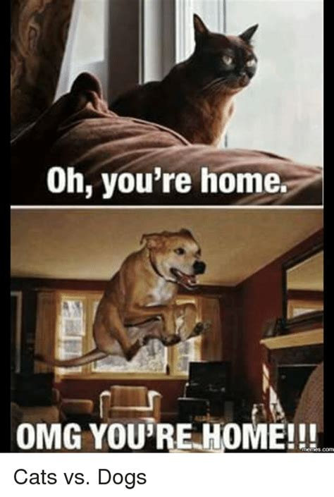 Cat And Dog Memes - oh you re home omg you re home comm cats vs dogs cats