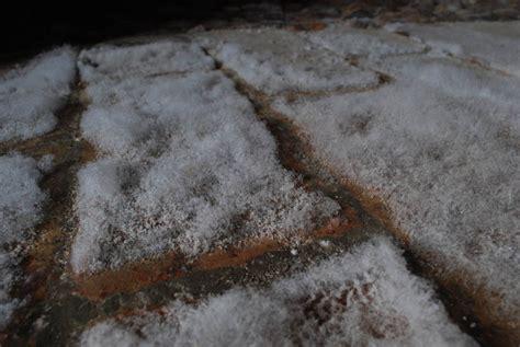 salpeter im keller jahreskalender biohof winkel salpeter w 228 chst aus dem