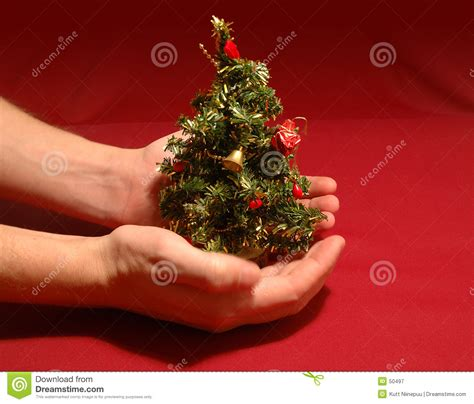 tiny christmas tree stock image image of protecting