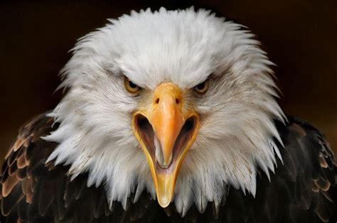 Amazing Animals Amazing Animal Ups 42 Pics Izismile