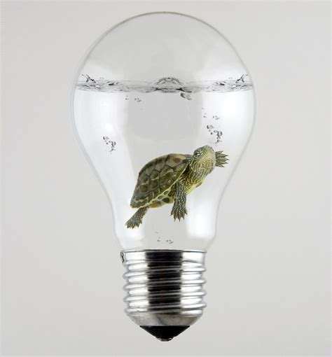 slower than a turtle the speed of electricity
