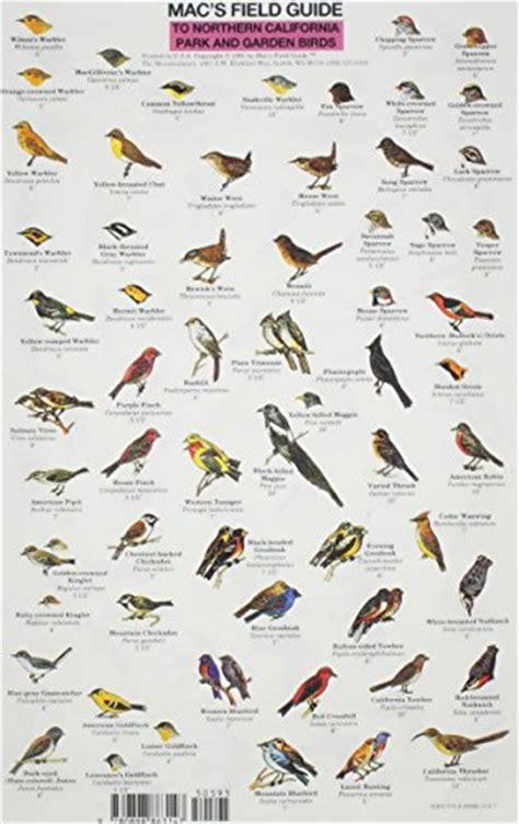 field guide california birds information frog