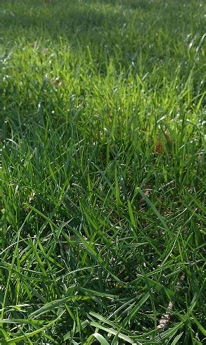 its spring tips on planting grass seed by vincent j zuzow