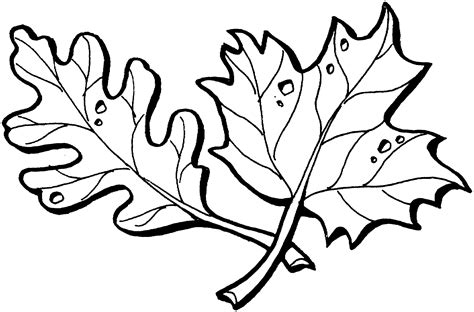 coloring pages maple leaves maple leaves coloring pages clipart panda free clipart