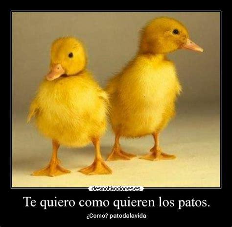 Imagenes Te Quiero Como Los Patos   te quiero como quieren los patos desmotivaciones
