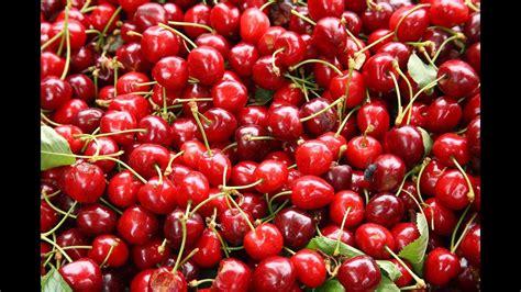 sleep juice cherry juice sleep melatonin