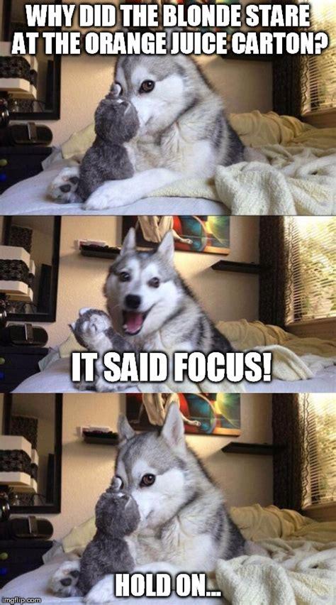 im bad  puns dog memes gifs imgflip
