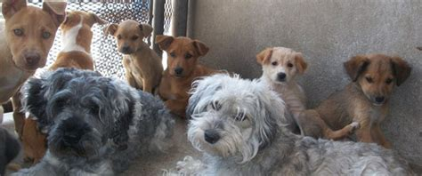 elevated alt in dogs rescue tijuana helping dogs in tijuana mexico dogrescuewithoutborders org