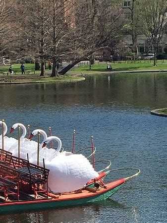 swan boats hours swan boats boston 2018 all you need to know before you