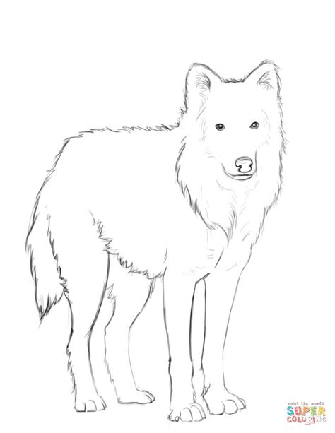 Arctic Wolf Coloring Pages arctic wolf coloring page free printable coloring pages