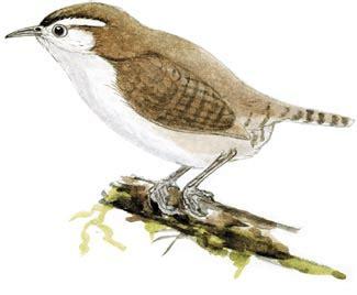 gua de aves 8428215332 birdwatching guatemala