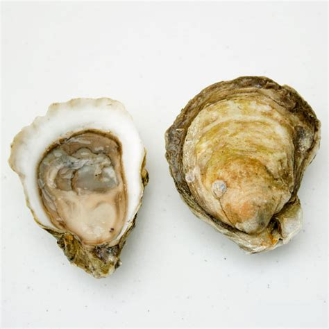 best oysters in cape cod wellfleet oysters ma element seafood